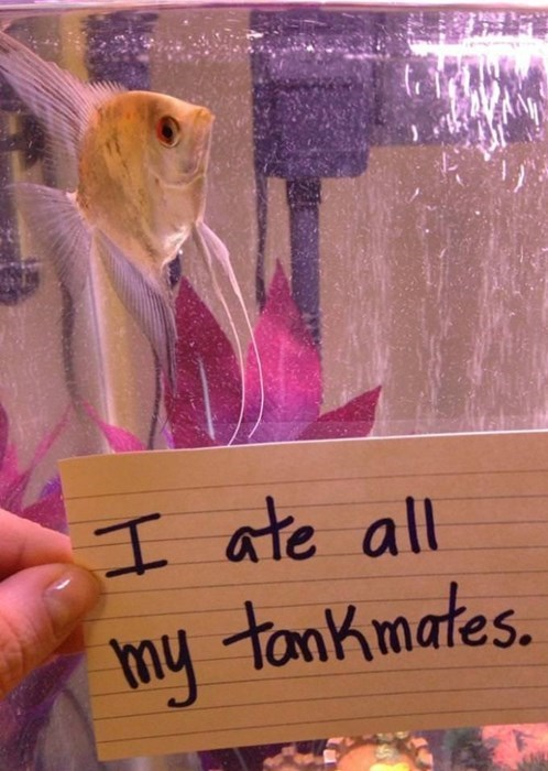 list jerks shaming fish - 386309