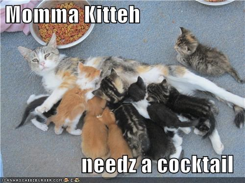caption cat cocktail kitten momma - 3863270144