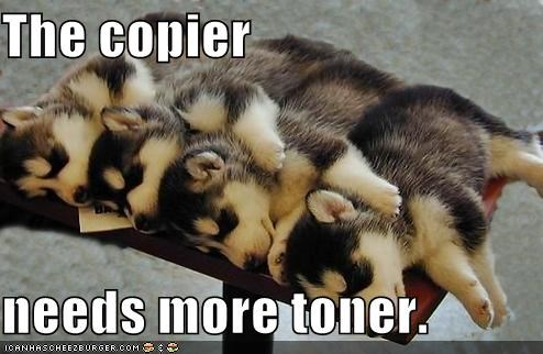 copier,cute,Hall of Fame,huskies,out,puppies,toner