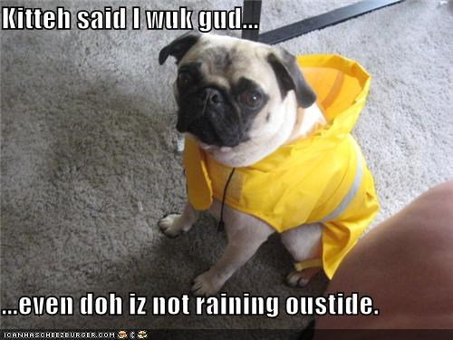 kitty says,looking good,no rain,pug,raincoat