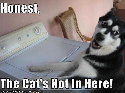 honesty,husky,lying,not here,washing machine,wheres-the-cat