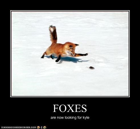 FOXES are now looking for kyle