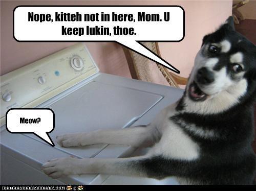 Nope, kitteh not in here, Mom. U keep lukin, thoe. Meow?