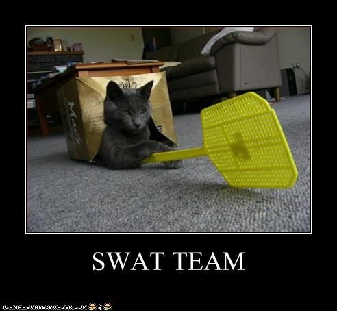 attack,caption,cat,fly swatter,swat team