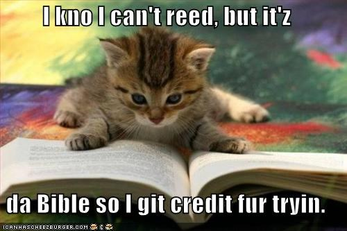 bible cant-read caption credit kitten trying