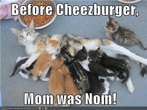 Cheezburger Image 3865714944