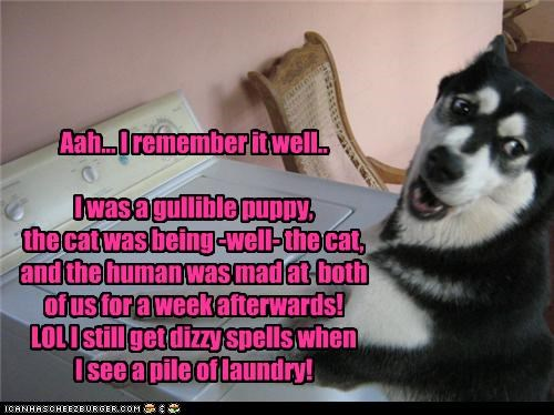Aah... I remember it well.. I was a gullible puppy, the cat was being -well- the cat, and the human was mad at both of us for a week afterwards! LOL I still get dizzy spells when I see a pile of laundry!