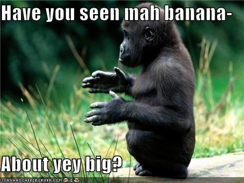 baby gorilla,banana,caption,lost,missing,this big,where is it