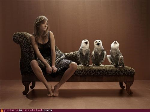 couch creepy owls wtf - 3866277120