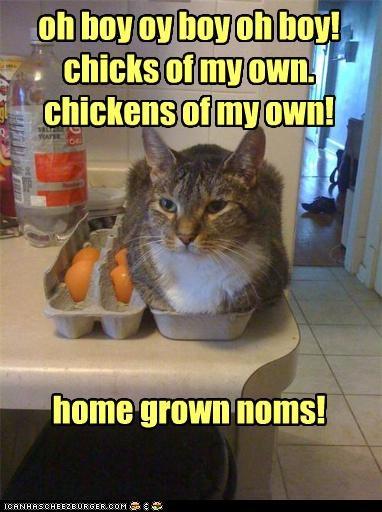 Cheezburger Image 3866284032