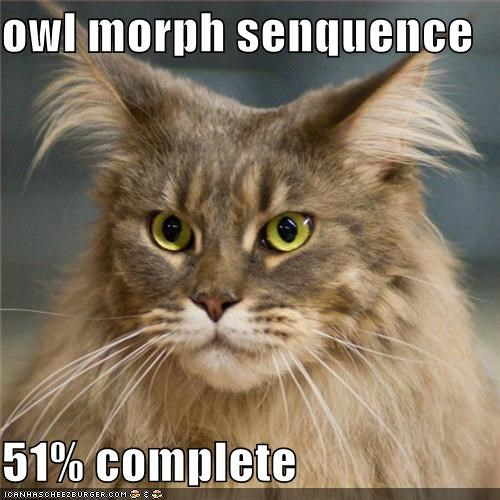 51 percent complete caption cat morph Owl owlcat - 3866353152