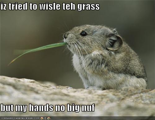iz tried to wisle teh grass  but my hands no big nuf