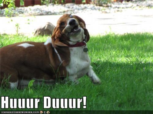 goggie derping dogs hurr durr - 3866567168