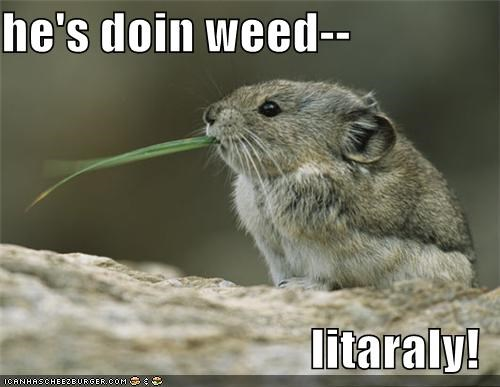 he's doin weed--  litaraly!