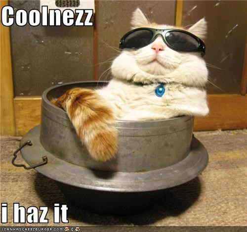 caption cat coolness has it smirk sunglasses - 3867554560