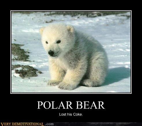 POLAR BEAR Lost his Coke.