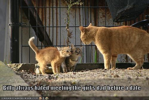before caption captioned cat Cats dad date girl hated kitten meeting - 3867688192