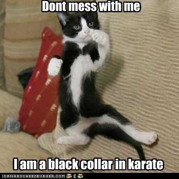 black collar caption cat dont-mess-with-me karate - 3867967744