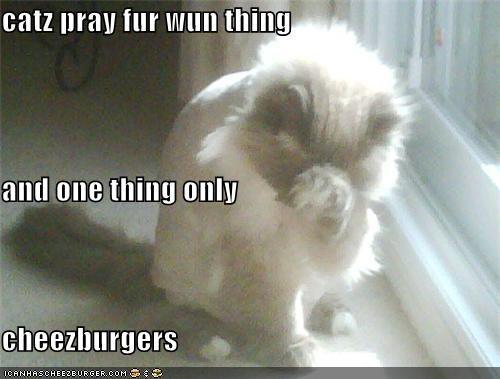 Cheezburger Image 3868568832