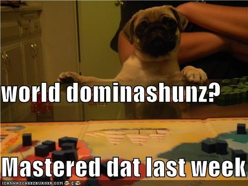 cute,flippant,mastery,pug,risk,world domination