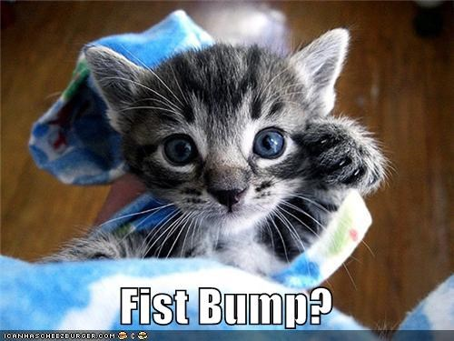 caption,fist bump,kitten,please,unsure