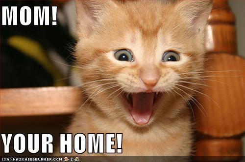 caption happy kitten love mom youre-home - 3869278208