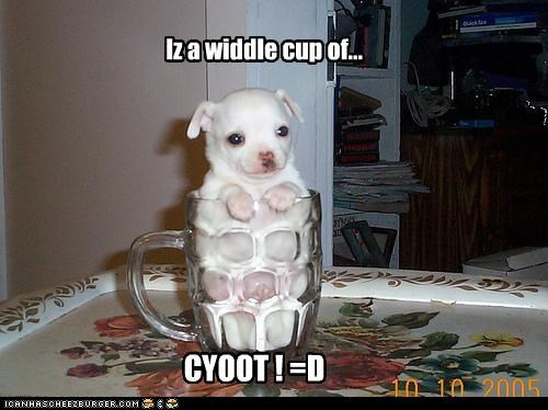 Iz a widdle cup of... CYOOT ! =D