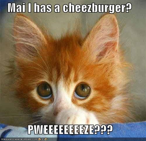 Cheezburger Image 3869663232
