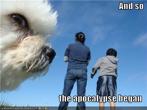 apocalypse cute disaster Fluffy photobomb whatbreed