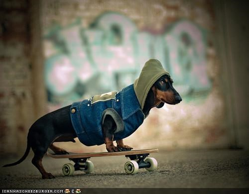 awesome dachshund denim hoodie punk rock skateboard stylish the ramones - 3870944256