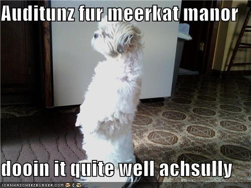 Cheezburger Image 3871261184