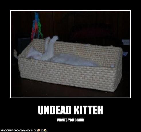 UNDEAD KITTEH WANTS YOU BLAHD