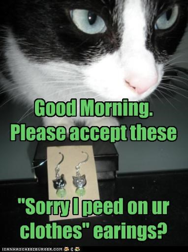 accept accident apologies caption captioned cat clothes earrings good morning peed please sorry - 3871812608