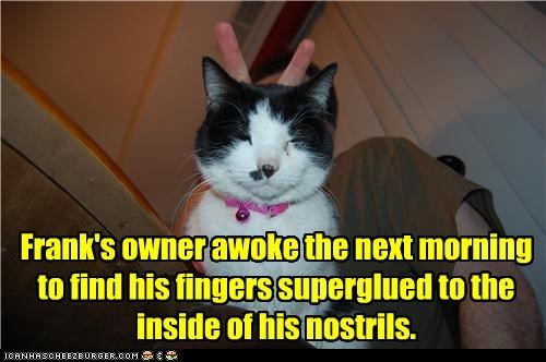 bunny ears caption captioned cat fingers nostrils payback Photo photobomb prank superglue - 3872113152