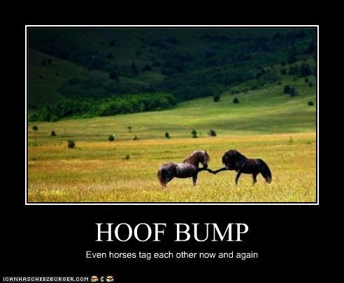HOOF BUMP Even horses tag each other now and again