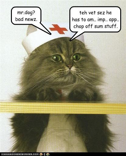amputate,bad news,caption,captioned,cat,dogs,hat,hospital,prognosis,vet