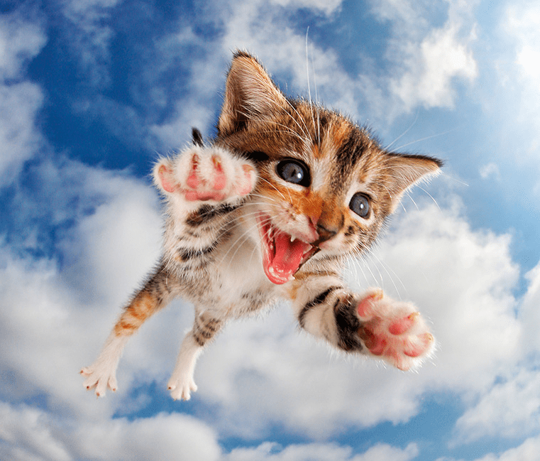 Pounce; photos of kittens jumping at the camera