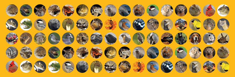 tHE CUTEST ANIMALS IN each of the states in America