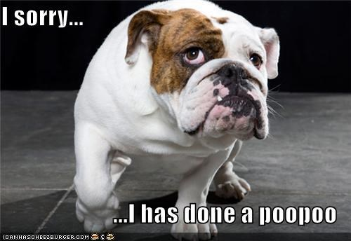 apologies bulldog oops poop sorry - 3874053120