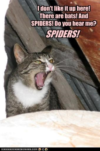 bats,caption,cat,dont-like-it,get me down,roof,scared,spiders