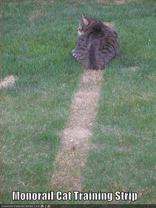 caption cat grass monorail cat training - 3874851840
