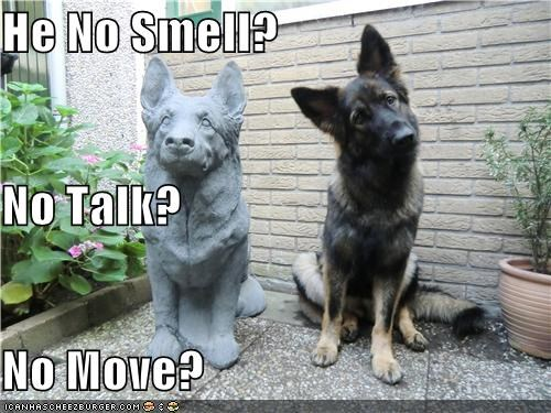 confused german shepherd puppy statue want to play - 3876115200