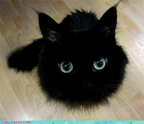 cat,nerd jokes,soot sprite