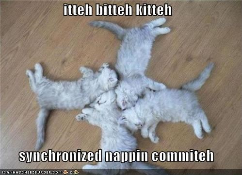 caption cute itteh bitteh kitteh committeh kitten synchronized napping - 3876539392