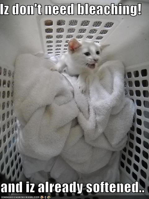 bleaching caption cat laundry scared softened trap - 3876905984