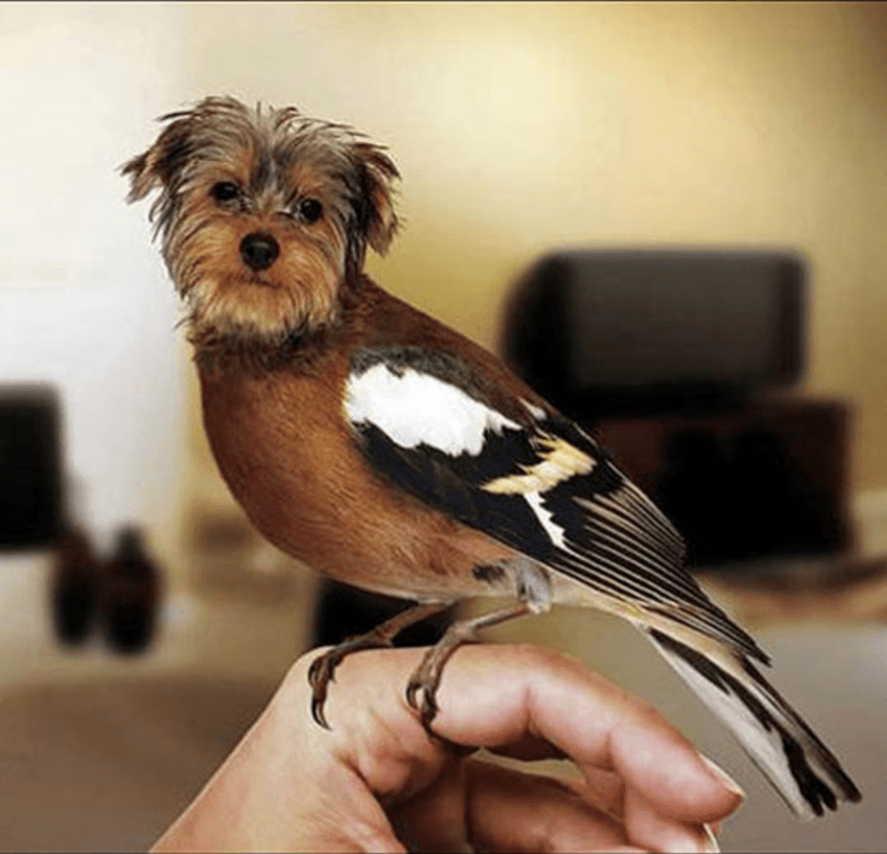 dogs birds funny animals - 3877637