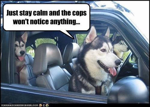 car,cops,huskies,stay calm,suspicious
