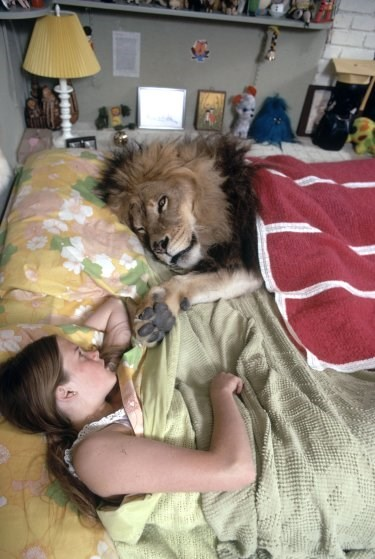 the incredible adoption story of a pet lion