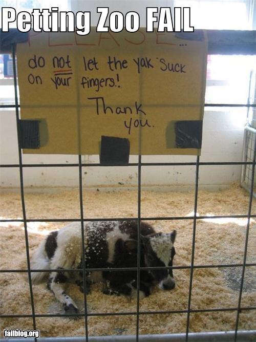 animals Awkward failboat petting zoo signs warnings zoo - 3878681856