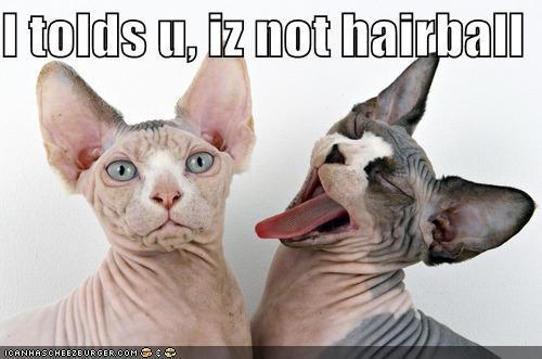 I tolds u, iz not hairball